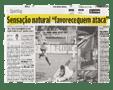"""""""La Sensazione naturale che favorisce chi attacca"""" – O JOGO – 11/11/2010"""